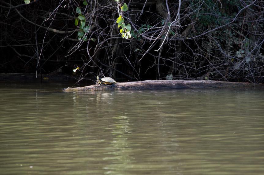 Santee River Paddle